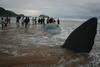 Un cachalote llega a la playa de Zarautz